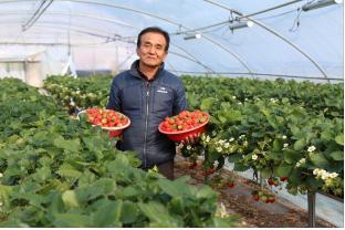 [크기변환]딸기수출 (1).jpg