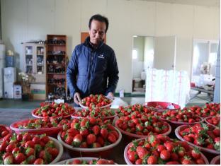 [크기변환]딸기수출 (2).jpg