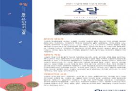 해양자연사박물관, 8월 이달의 해양자연사전시품 '수달' 선정