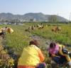 '가을 준비 나선' 함평군 여성농업인, 함평천 제초작업 한창